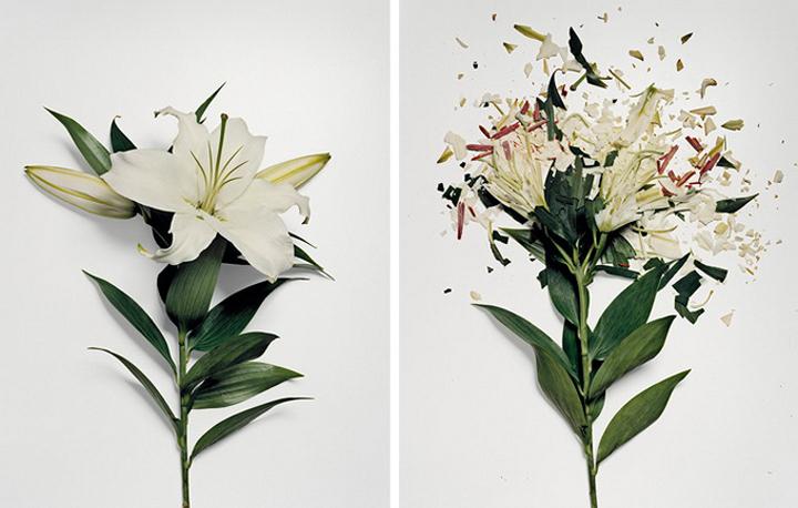 разбитые цветы